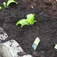 1st Choice Fertilizer.jpg