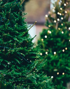 Christmas Tree Footer