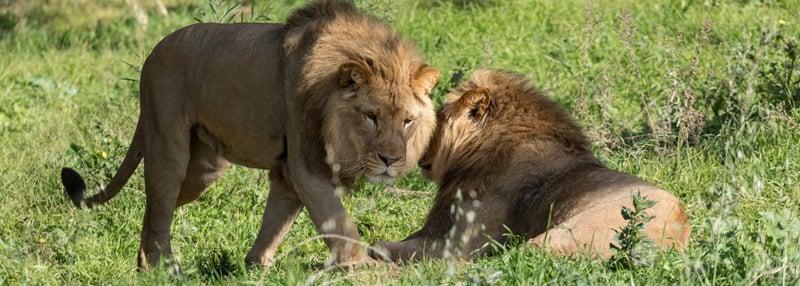 Oakland Zoo Blog Header